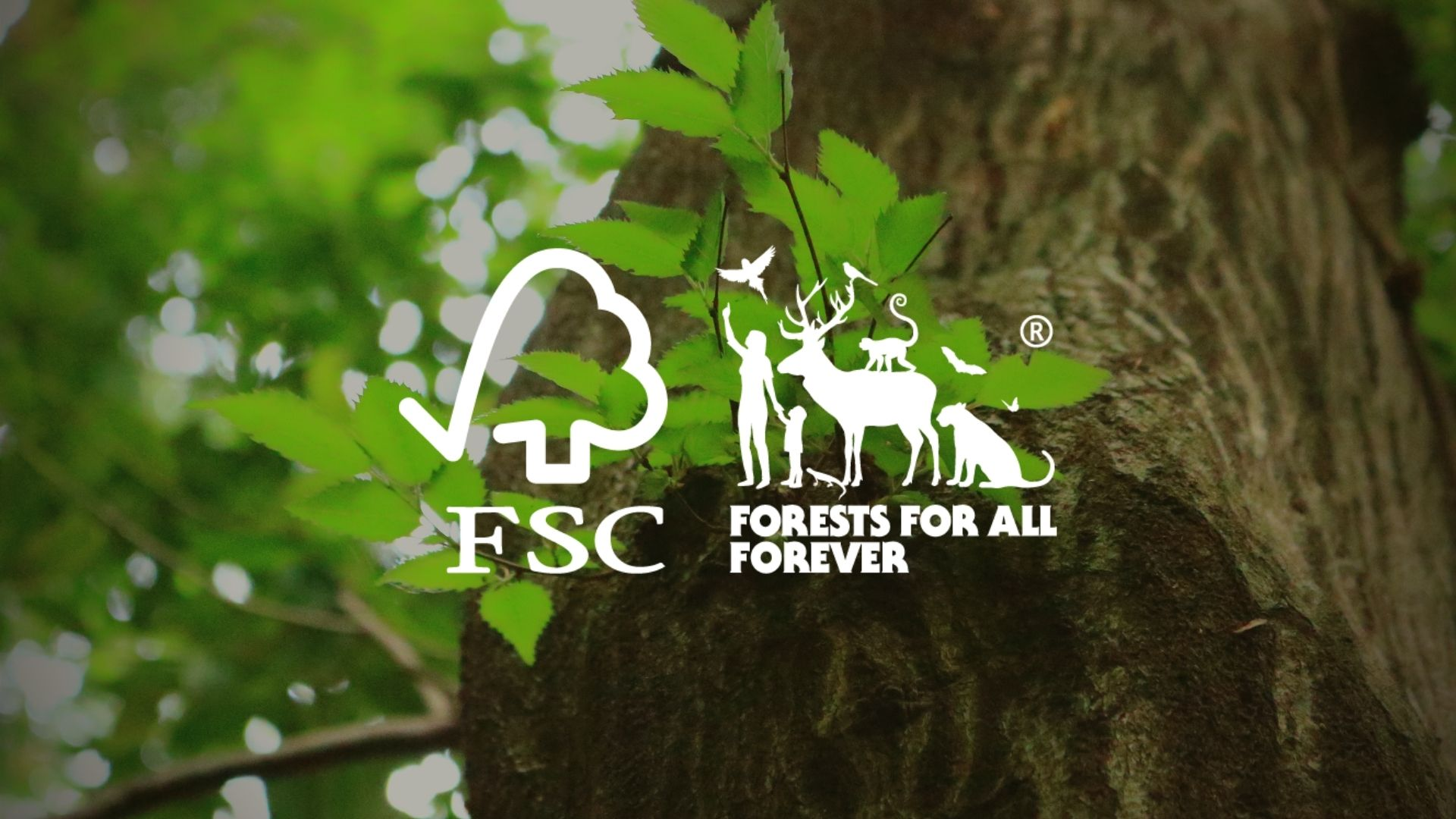 We are FSC certified!